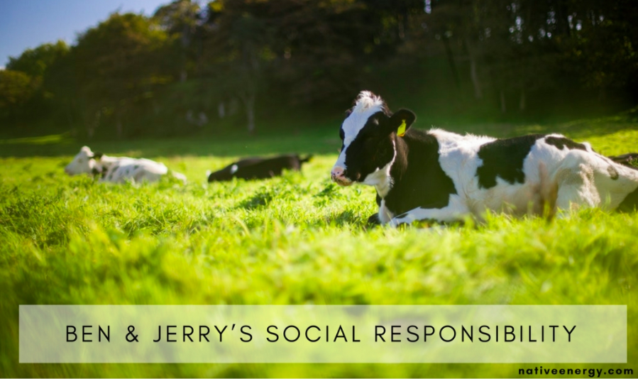 Ben and Jerry's Carbon Emission Reduction - Cows in Pasture