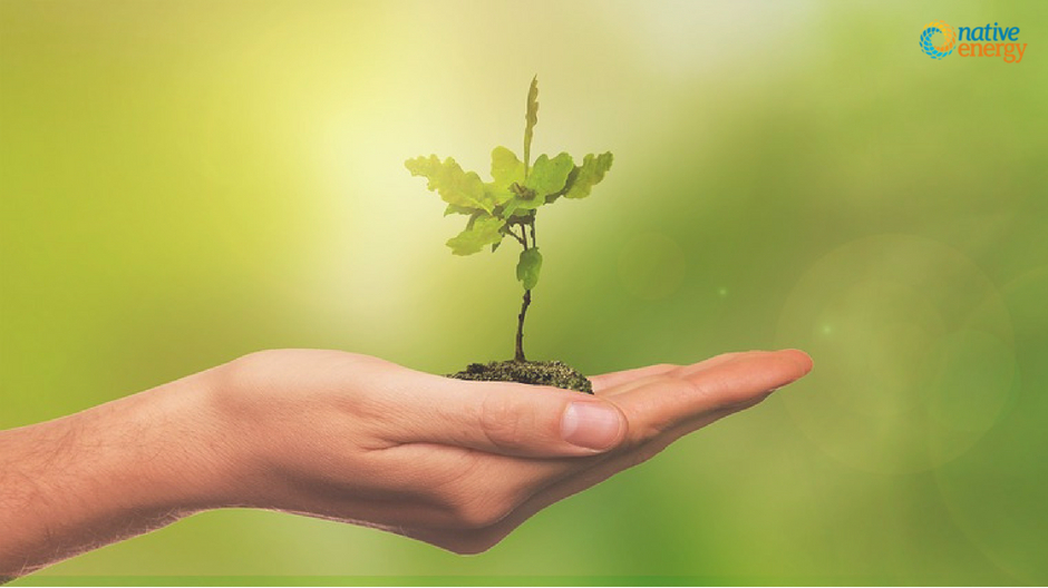 Ways to Cut Carbon Footprint_ Reducing vs Offsetting