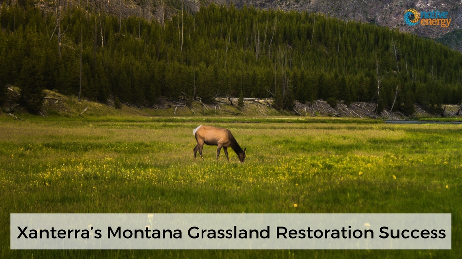 Xanterra's Montana Grassland Restoration Success