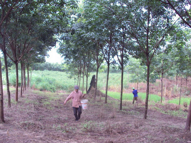 Laos forestry3